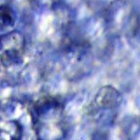 bubble cell image